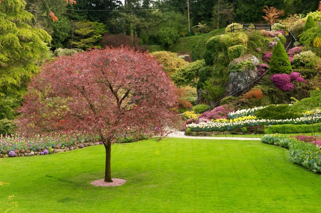 Najlepsze Drzewa Na Solitery Uprawa Roślin Ogrodosferapl
