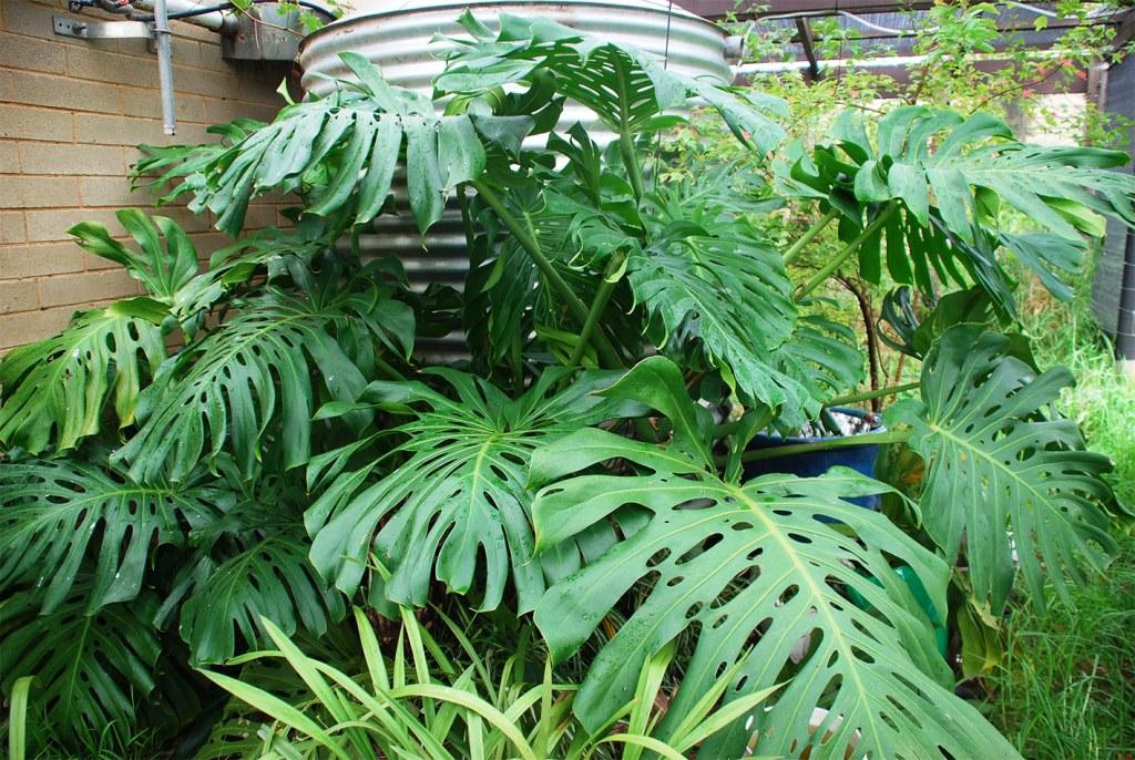 Top 10 Roślin Pnących Do Pomieszczenia