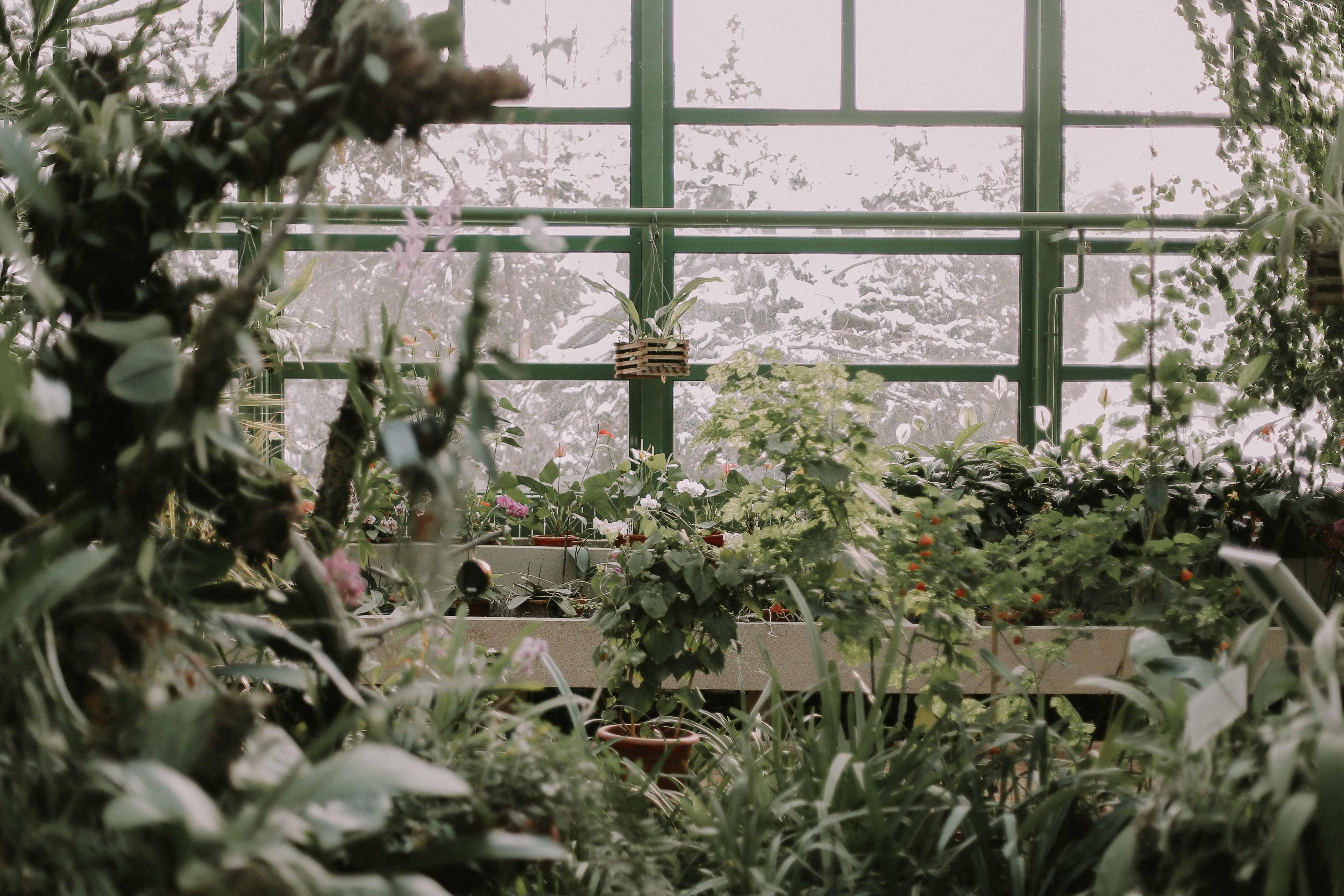 Pomysły Na Aranżację Zimowego Ogrodu Poradnik Ogrodosferapl