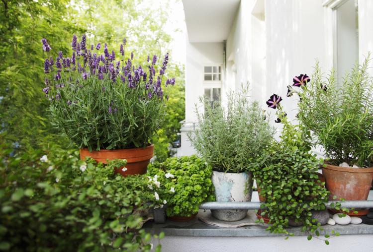 Uprawa Roślin Jadalnych Na Balkonie Poradnik Ogrodosferapl