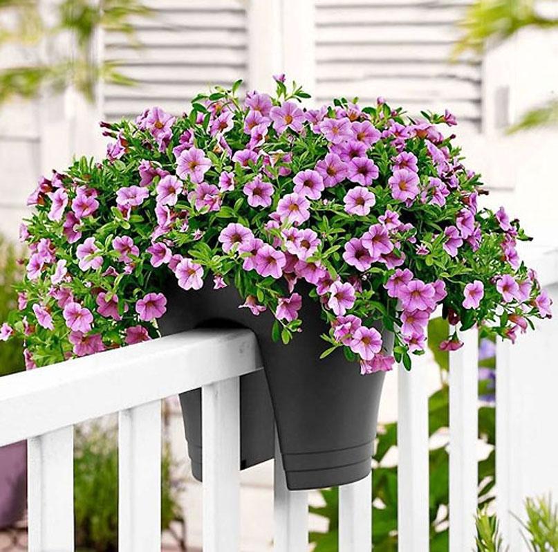 Rośliny Doniczkowe Na Balkon I Taras Uprawa Roślin