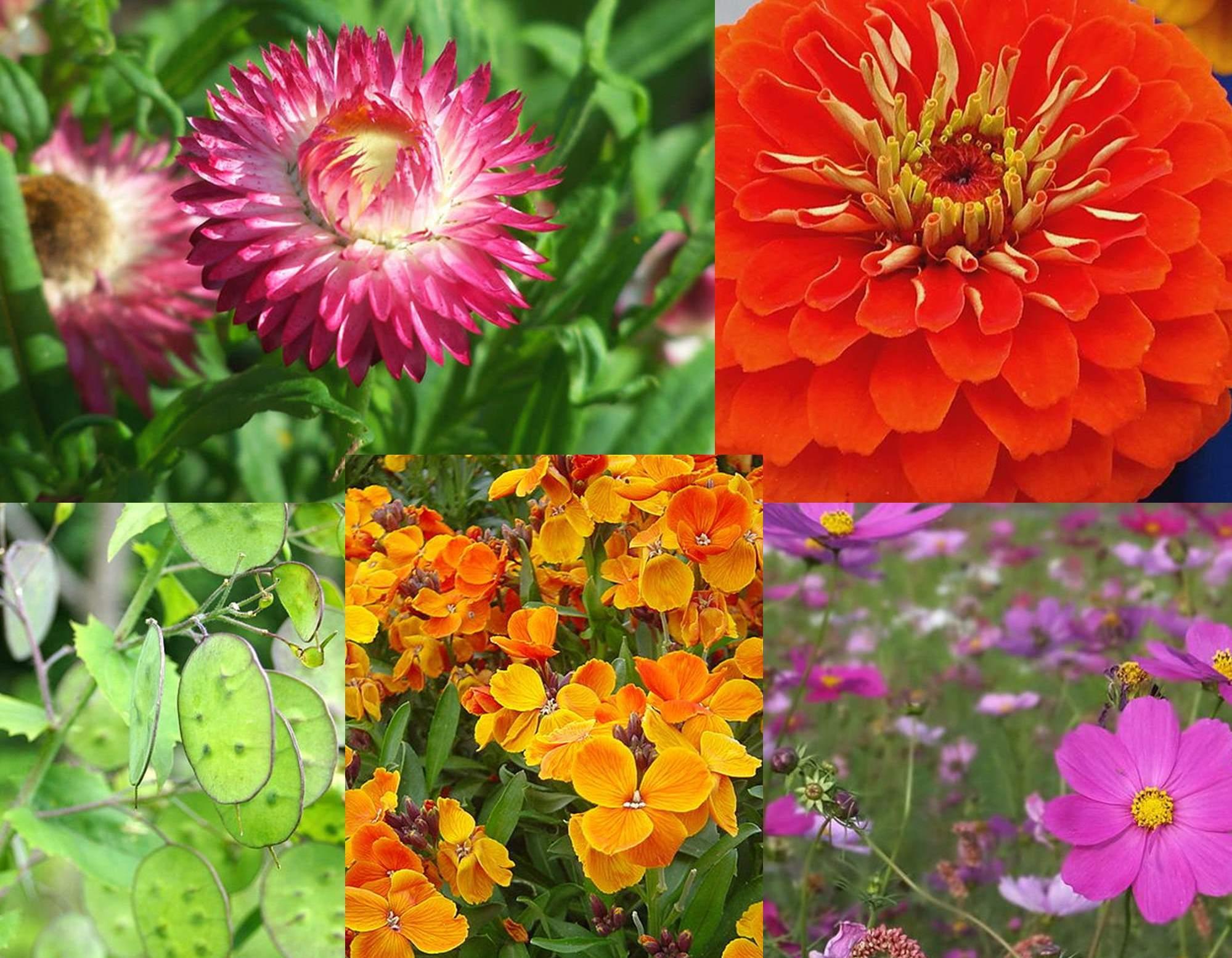 Najpiękniejsze Kwiaty Lata Przegląd Gatunków Ogrodowe
