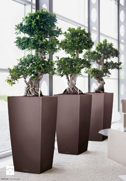 Jakie Donice Wybrać Uprawa Roślin Ogrodosferapl